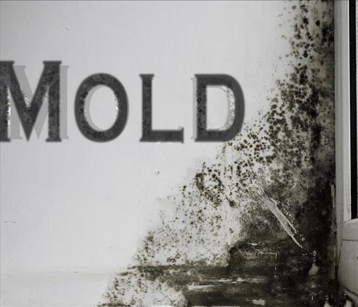 Mold Remediation What To Expect From Professional Mold Damage Remediation In Trinity